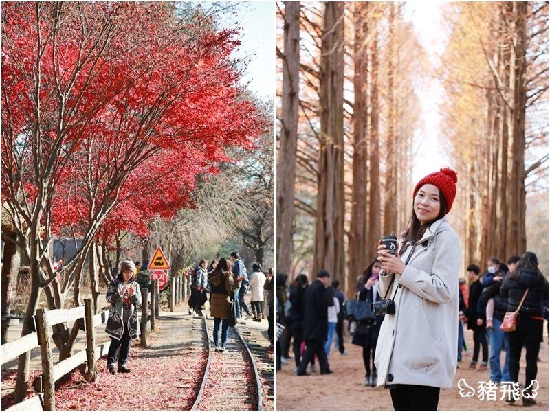 【韓國】韓劇拍攝的超熱門經典景點,銀杏大道、水杉林道怎麼拍都美!太夢幻啦!~首爾外郊‧南怡島