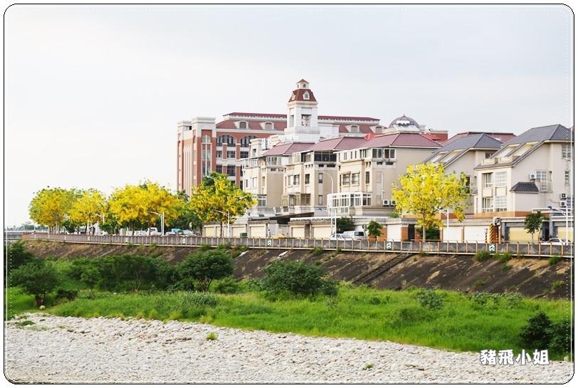 台中‧旱溪阿勃勒 (11).JPG