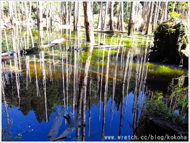 【南投】忘憂森林外拍~逛完妖怪村再來欣賞杉林溪的仙境