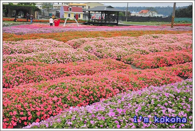 【台中】后里中社花海~享受台灣浪漫異國風情