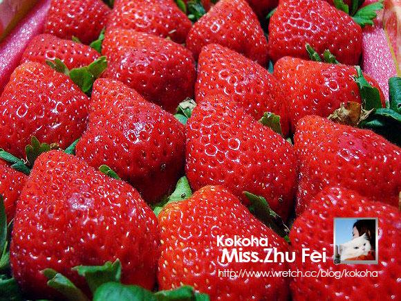 【苗栗】幸福的草莓。冬季限定酸酸甜甜戀愛滋味