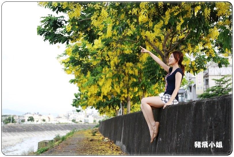 台中‧旱溪阿勃勒 (23).JPG