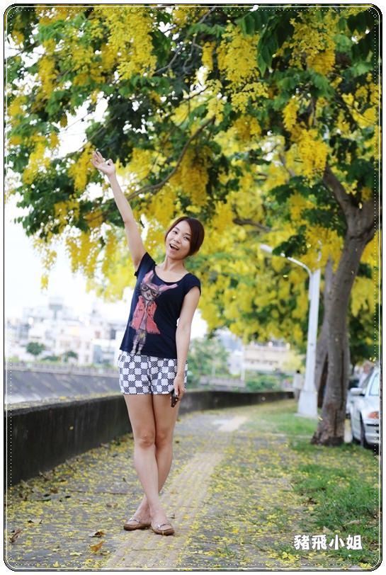 台中‧旱溪阿勃勒 (28).JPG