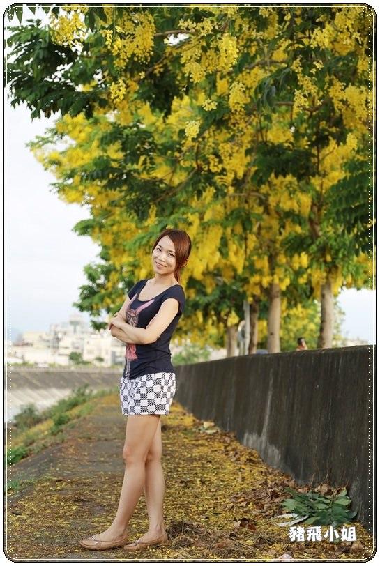 台中‧旱溪阿勃勒 (20).JPG