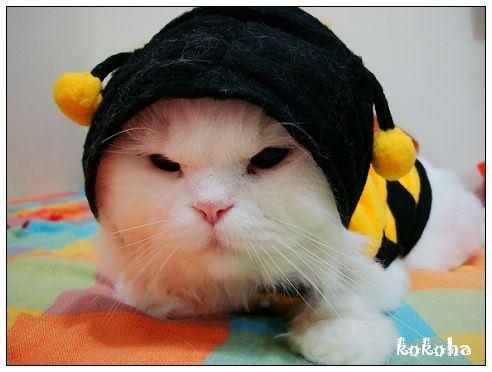 【嚕嚕咪】秋冬新裝。大黃蜂